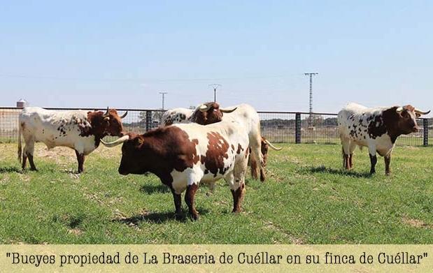 braseria34_thumb-619x391